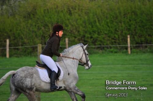 Bridge Farm Sam Cross Country
