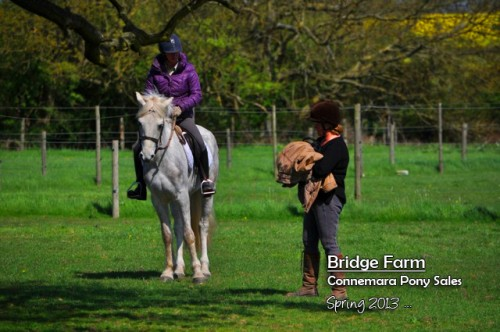 Bridge Farm Schooling Patsy