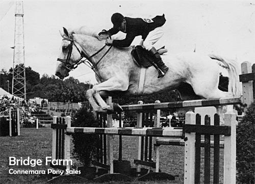 Show jumper Stanley Taylor