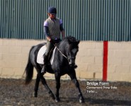 Connemara Gelding Turbo - schooling on the flat