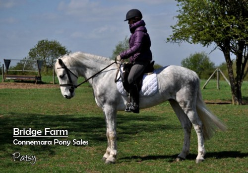 Bridge Farms Connemara Gelding Patsy