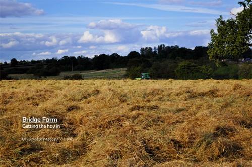 Bridge Farm hay harvest