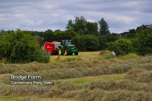 Summer 2013 and a good crop of hay for Bridge Farm