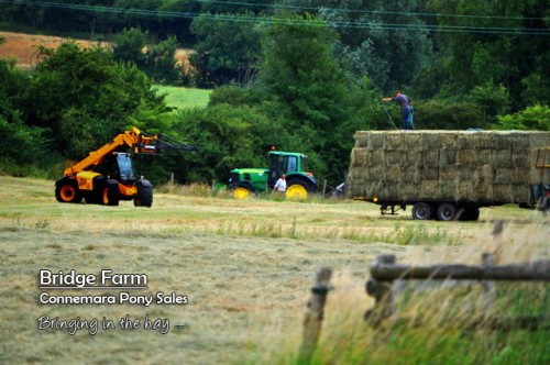 Hay making at Bridge Farm, Essex in Summer 2013