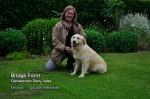 Bridge Farms Emma - a beautiful Golden Retriever pup