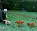 Playing with the Bridge Farm Red Fox Puppies