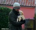 Cute and Cuddly puppies at Bridge Farm