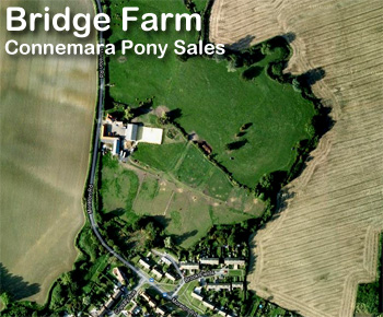 Bridge Farm Essex