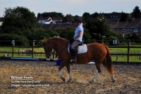 Chestnut Mare Ginger flatwork training