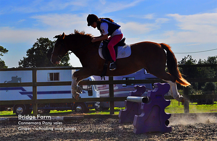 Chestnut Mare Ginger jumping training