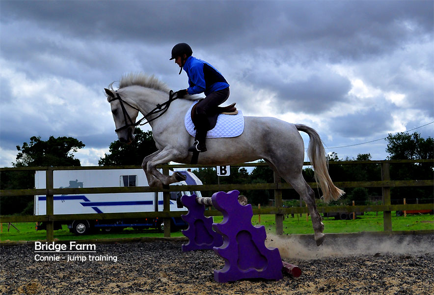 Connie Irish Sports Pony showing her jumping potential