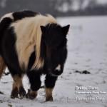 New Pony for the Youngest Bridge Farm, farmhand