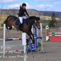 Sweet Petal last spring. Hope she will perform in show jumping this year too