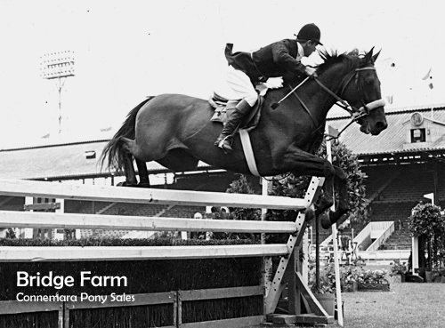 Stanley Taylor of Bridge Farm Show Jumping